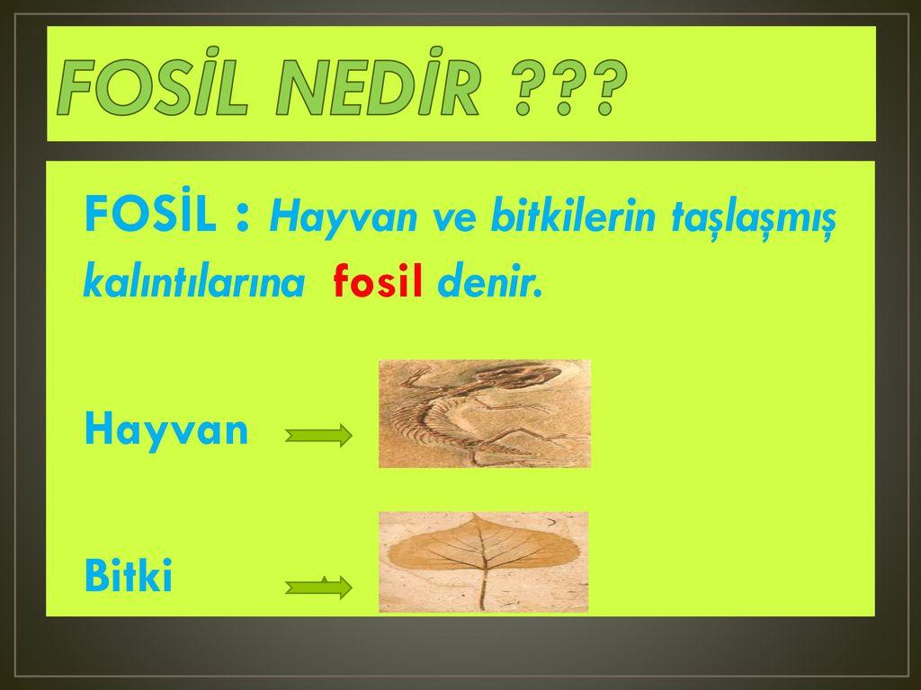 Fosil nedir ilk bulunan fosiller nelerdir kaç tür fosil vardır