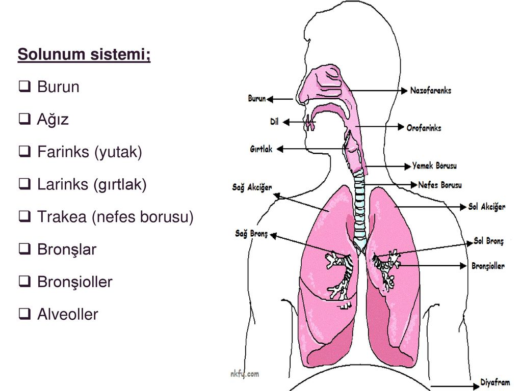 Çocuklarda üst solunum yolu hastalıkları
