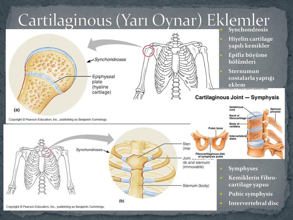 Yrd Doc Dr Ipek Eroglu Kolayis Ppt Indir Synchondrosis (geçici eklem) • eklem yüzleri arasında mutlaka discus articularis bulunan eklem tipi.symphysis • sinovyal tip eklemlerde mutlaka bulunan yapılar. yrd doc dr ipek eroglu kolayis ppt
