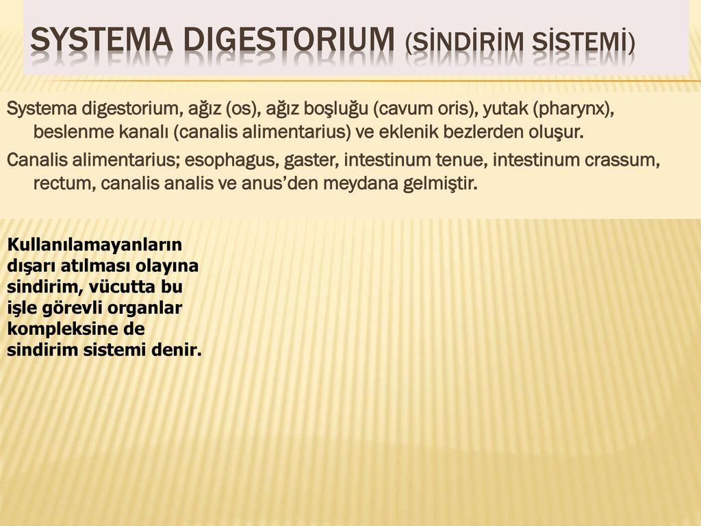 İnsan dişinin yapısı ve ağız boşluğunun diğer organları hakkında biraz
