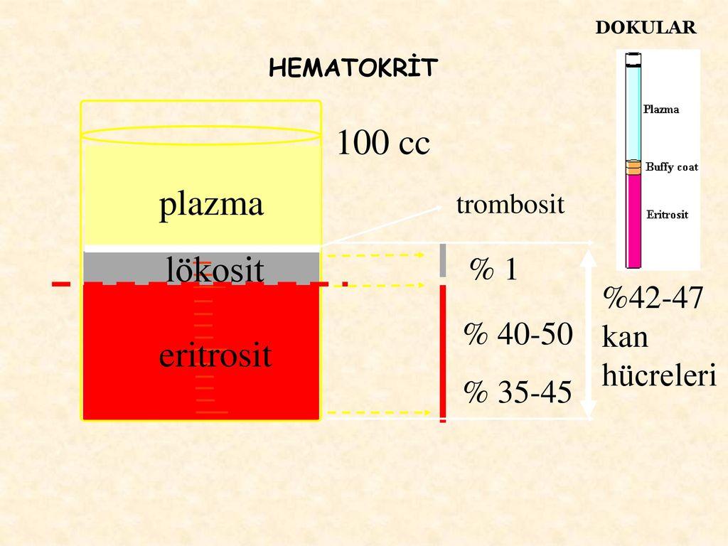 Eritrosit ve Lökosit Değeri