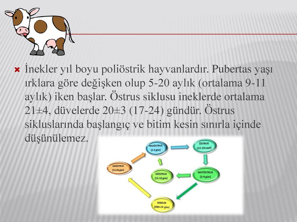Ineklerde Ovsynch Yöntemiyle östrus Ve Ovulasyon Sinkronizasyonu