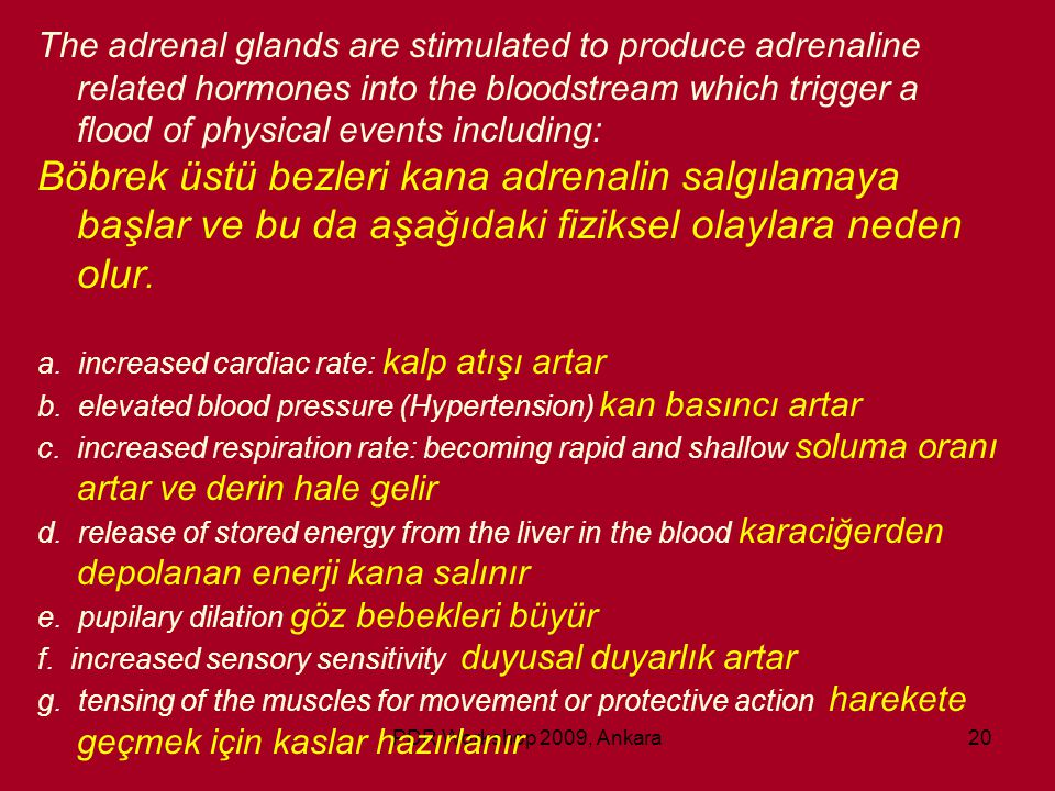 The adrenal glands are stimulated to produce adrenaline related hormones into the bloodstream which trigger a flood of physical events including: