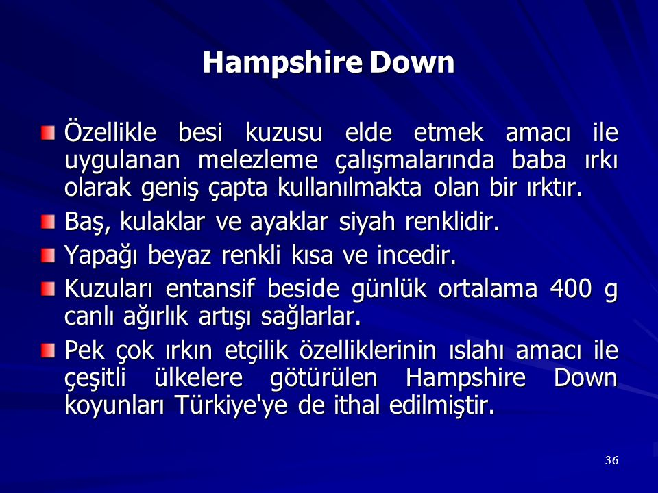 Hampshire Down