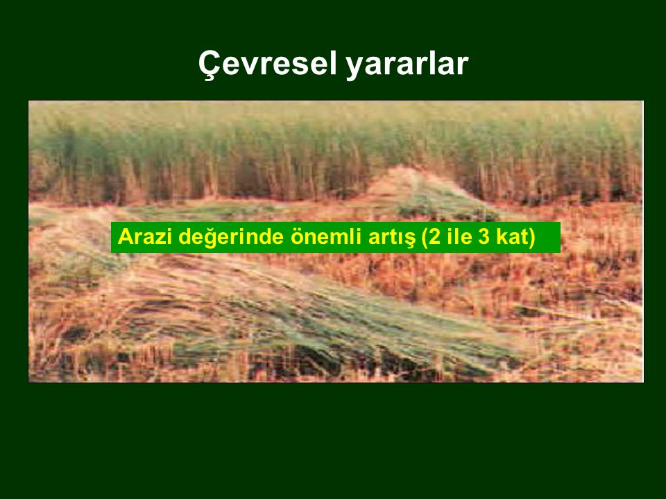 Çevresel yararlar Provide green cover to soil Beautifies the Landscape