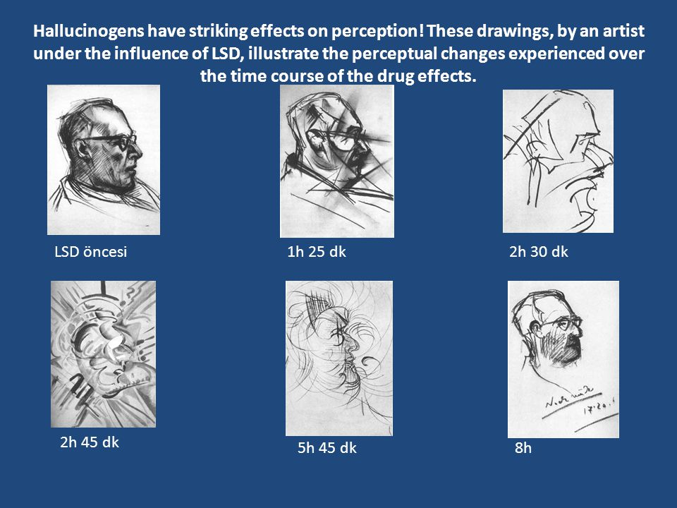 Hallucinogens have striking effects on perception