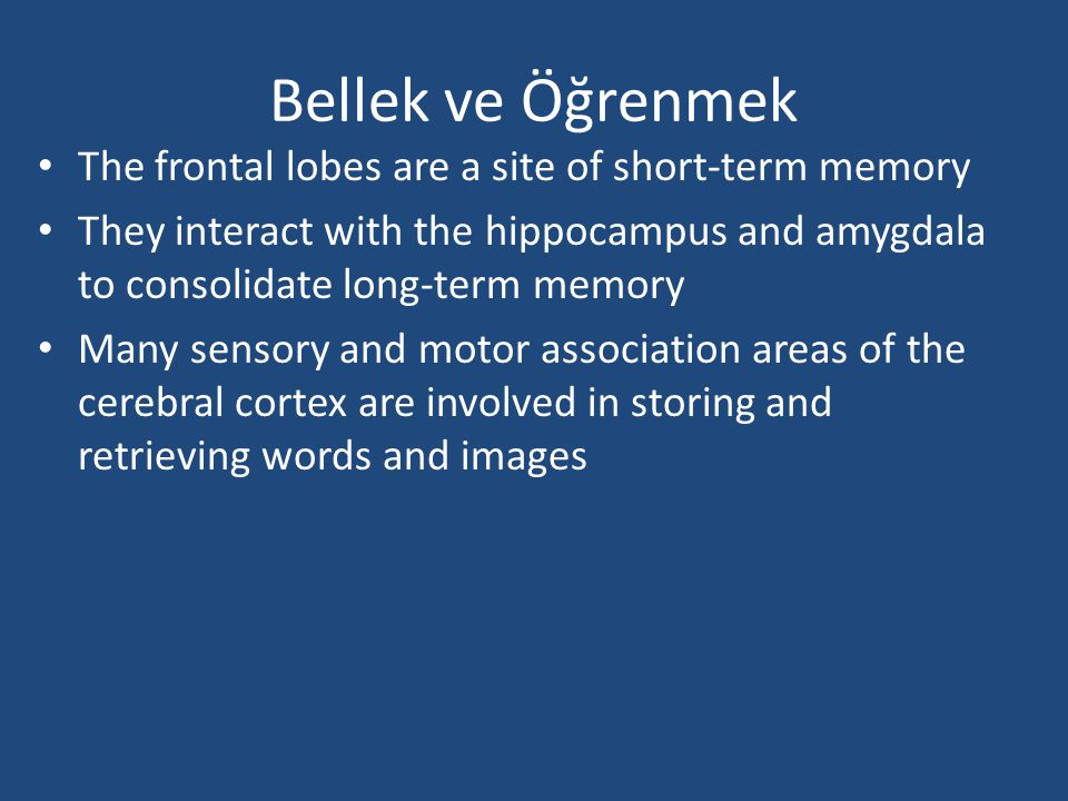 Bellek ve Öğrenmek The frontal lobes are a site of short-term memory