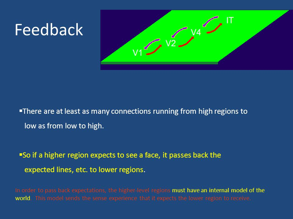 Feedback There are at least as many connections running from high regions to. low as from low to high.