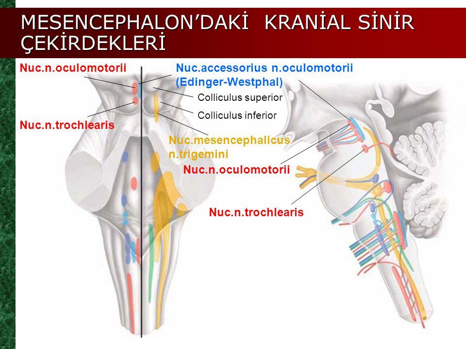MESENCEPHALON-ORTABEYİN Prof.Dr. Yusuf Zeki YILDIZ - ppt video ...