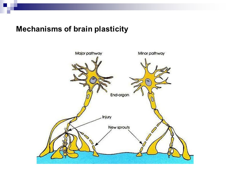 Mechanisms of brain plasticity