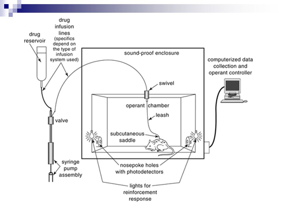 Figure 9.11.1 Operant intravenous self-administration apparatus used to deliver response-contingent drug infusions and collect data during i.v.