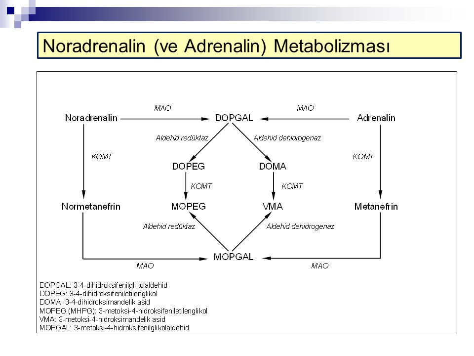 Noradrenalin (ve Adrenalin) Metabolizması