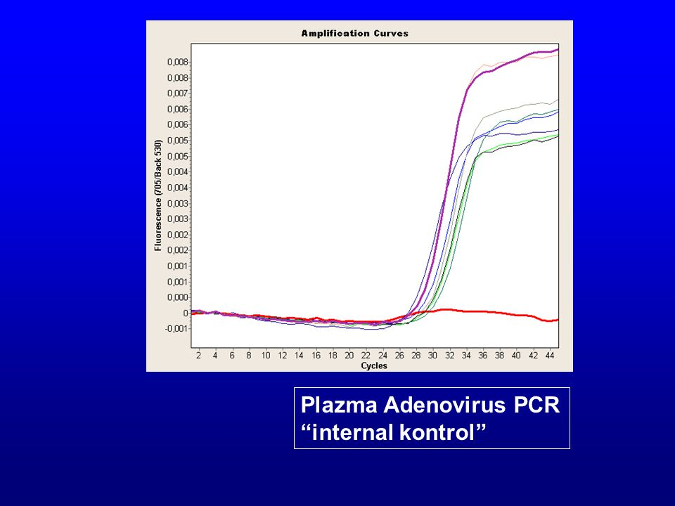 Plazma Adenovirus PCR internal kontrol