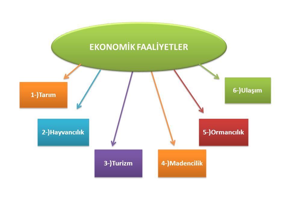 Ekonomik Faaliyetler Dergisi Nedir