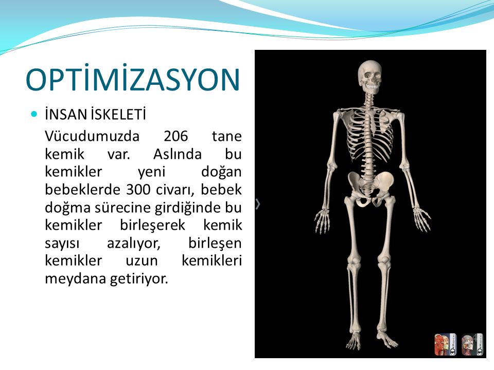 OPTİMİZASYON İNSAN İSKELETİ