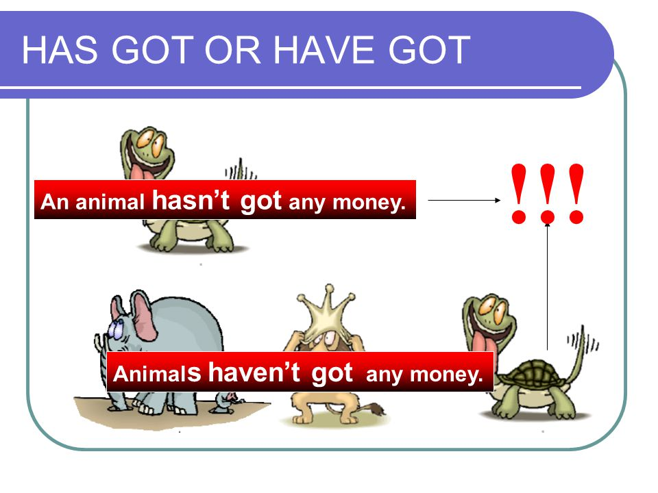 !!! HAS GOT OR HAVE GOT An animal hasn't got any money.
