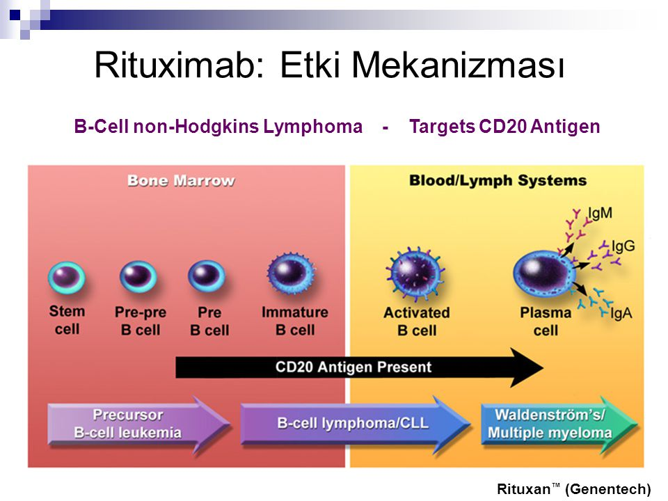 rituximab discovery process Identification of compounds that enhance the anti-lymphoma activity of rituximab using flow  including drug discovery,  high content screening applied.
