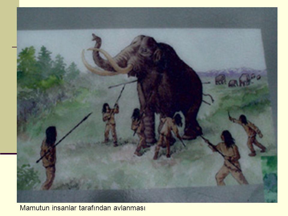 Открытки дню, картинки мамонта первобытного человека все на эту тему