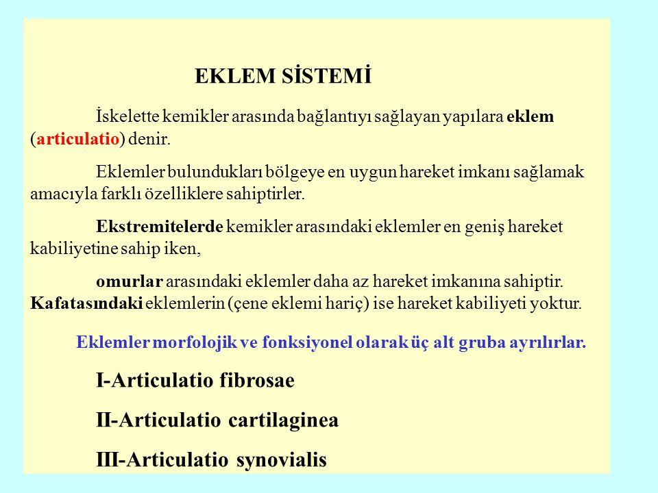 Systema Articulare Eklem Sistemi Prof Dr Nihat Ekinci Ppt Video Online Indir Die synchondrosis sphenooccipitalis als bestandteil des chondrokraniums durchläuft. systema articulare eklem sistemi prof
